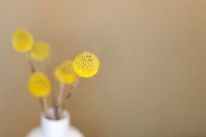 Yellow flowers by Danielle McInnes