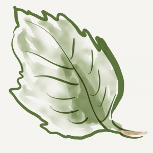 Drawing of a leaf