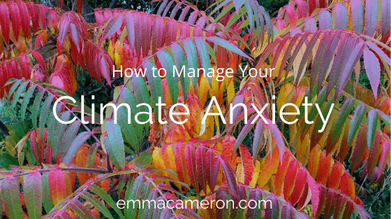 How to Manage Your Climate Anxiety - picture of colourful leaves